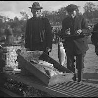 Whitefish caught with fyke nets for sale at the fish market in the town of Gamlakarleby in 1924.   Photographer: Curt Segerstråle.  Archive collection: The Society of Swedish Literature in Finland (SLS), sls.finna.fi SLS 388_110